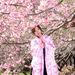 。◯ 春を先取り ◯ ゜春着物といえばコレ!暖かくなったら着たい着物柄☆BEST4