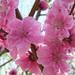 【ナチュラル愛され♡】春を先取り!花咲く和装メイク♪【桃編】