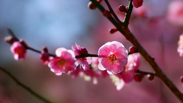 梅の花言葉は【高潔・艶やかさ・気品】♡